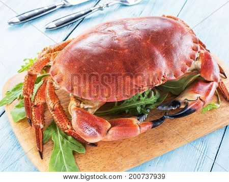 Cooked brown crab or edible crab isolated on the blue wooden table.