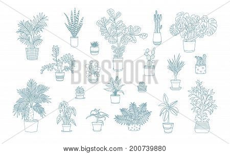 Different monochrome houseplants icons in line art style