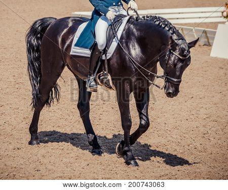 Dressage horse and rider. Black horse portrait during dressage competition. Advanced dressage test. .