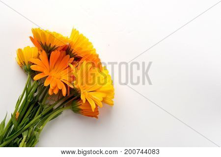 Yellow flowers on white background in the left corner