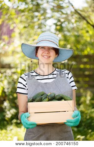 Photo of smiling brunette agronomist in hat with crop of cucumbers in box on background of plant