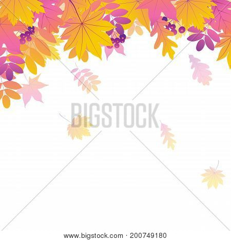 Background with autumn leaves. Set of leaf. Vector illustration.