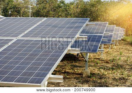 Solar Farm Green Energy From Sun Light