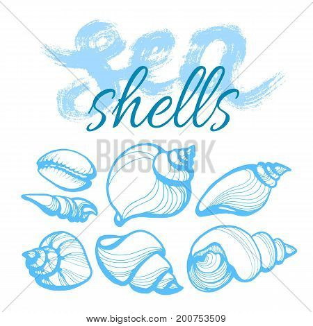 Set with the seashells and words on white background. Lettering. Vector. Handwritten illustration for t-shirt design poster web design print