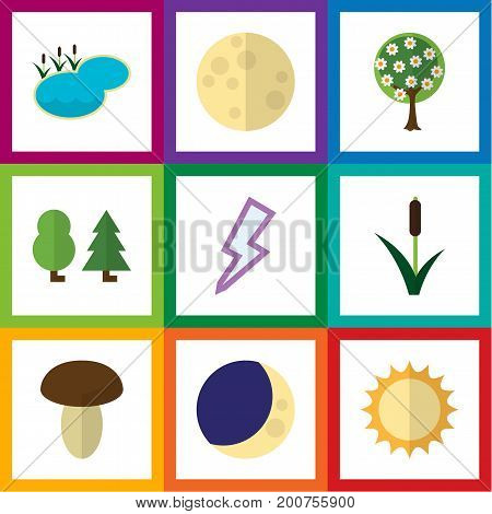Flat Icon Natural Set Of Cattail, Tree, Pond And Other Vector Objects