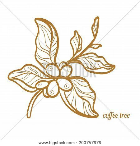Branch of coffee tree with leaves and natural coffee beans. Botanical contour drawing. Symbol. Vector illustration isolated on white background eps.10