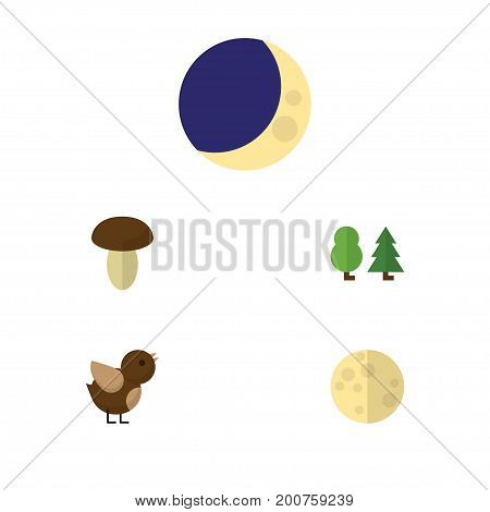 Flat Icon Nature Set Of Lunar, Half Moon, Bird And Other Vector Objects