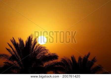 Beautiful morning sun and palm trees Egypt