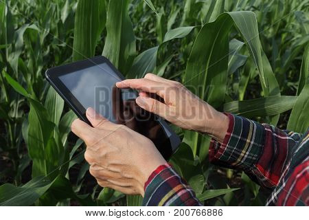 Agronomist or farmer inspecting quality of green corn plant field using tablet