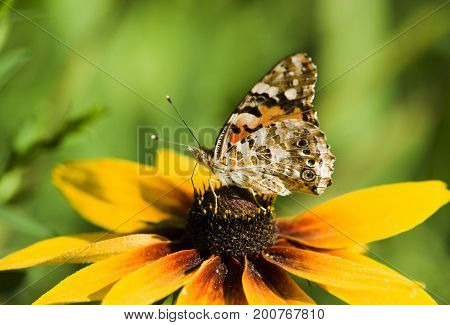 Butterfly on a flower against a nature background