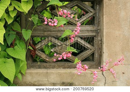 Pink Flowers And Climber Leaf