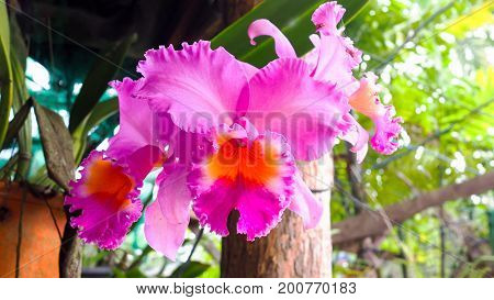 Pink purple violet orchid flower blossom in a garden nature.