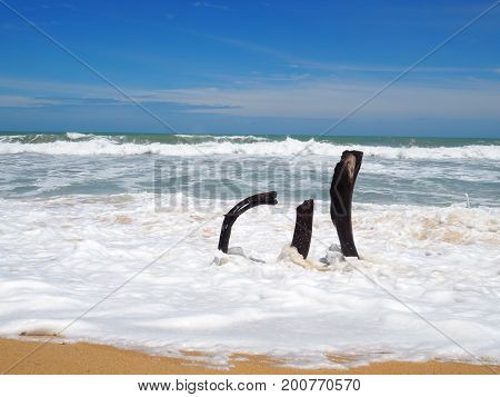 Dead tree stump on beach with white soft sea foam wave and brown sand on beach in sunny day blue sky.