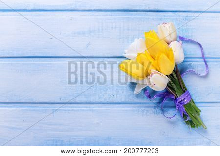 Bright yellow and white spring tulips on blue wooden background. Selective focus. Place for text. Top view.