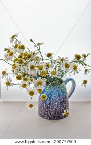 Beautiful bouquet of bright chamomiles in the Blue-violet ceramic vase on a white background