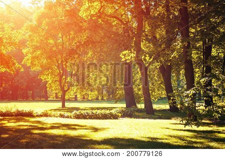 Autumn landscape - colorful autumn park in with golden autumn trees lit by sunlight. Beautiful autumn landscape scene in the autumn park, sunny autumn landscape view. Golden autumn trees in autumn sunlight