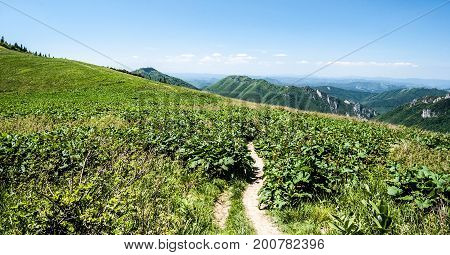 hiking trail on mountain meadow goes from Stohove sedlo to Stoh hill with partly rocky hills and blue sky in Mala Fatra mountains in Slovakia