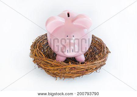 Pink piggy bank in a birds nest
