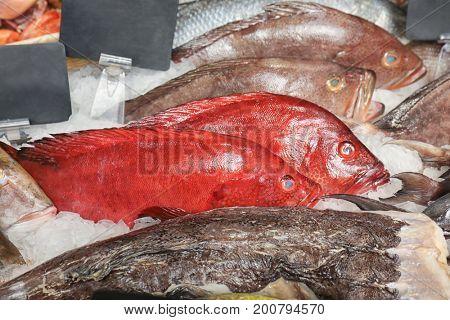 Fresh fish in supermarket