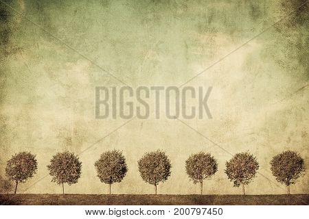 highly detailed grunge image of tree alley