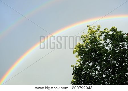 A real double rainbow in the sky with a tree