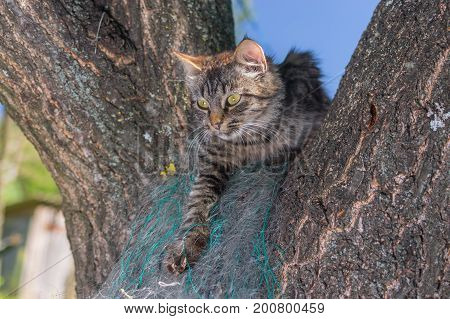 Young tabby cat hiding in secluded nook on a tree branch in summer garden