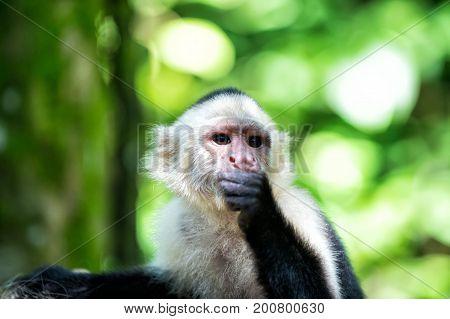 Primate In Jungle On Sunny Day