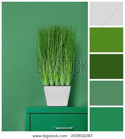 Beautiful houseplant on wall background. Palette with green color