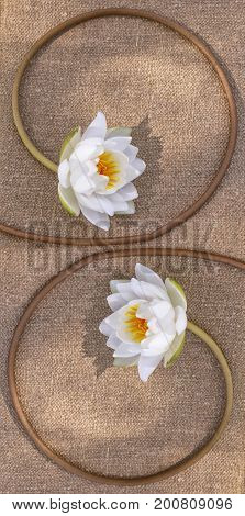 White bright and colorful flower water lily.