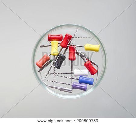 Endodontic Equipment: Hand Root Canal Files Protaper in Petri dish glass closeup