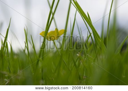 Green bush with yellow flower, lonely flower out of focus
