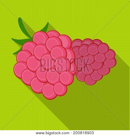 Raspberry, sweet fruit.Fruit single icon in flat style vector symbol stock illustration .