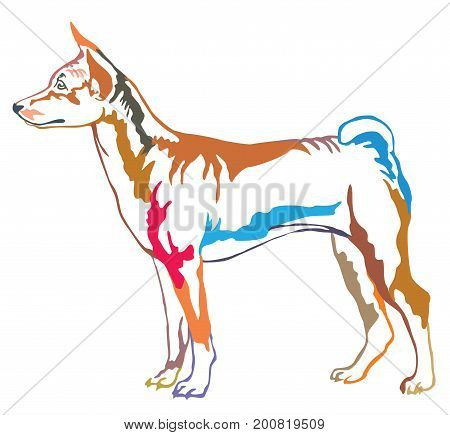 Colorful decorative portrait of standing in profile dog Basenji vector isolated illustration on white background