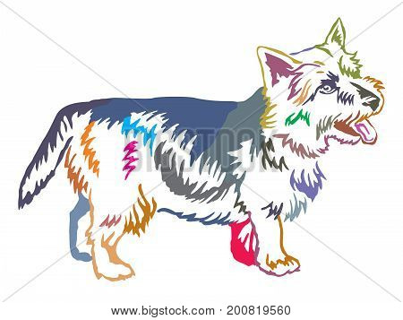 Colorful decorative portrait of standing in profile dog Norwich Terrier vector isolated illustration on white background