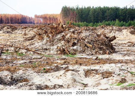 Deforestation. Uprooting Of Roots Of Trees. Chaotic Deforestation In Country With Small Economy Lead
