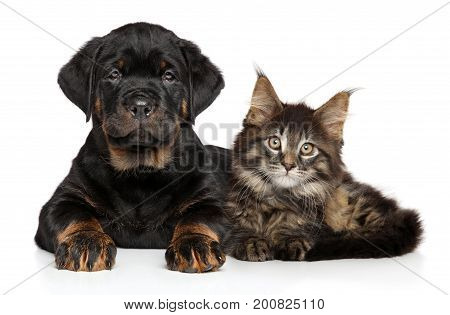Puppy And Kitten Lying Together