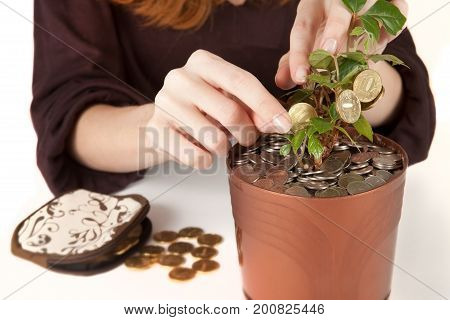 Woman is harvesting coins from money tree. Investment, profit, revenue concept. Close up