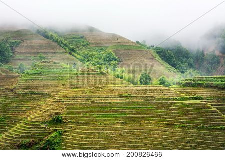 Foggy Rice Terrace Landscape Viewpoint