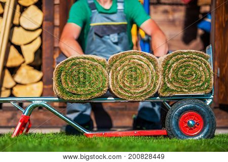 Grass Turfs Rolled on a Moving Cart. Preparing For Nature Grass Installation.