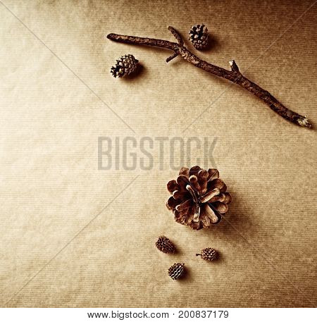 Natural Cones and Dry Tree Branch on a Brown Paper Background