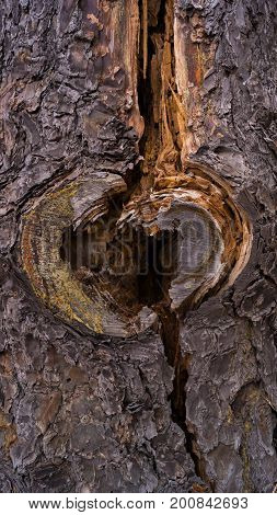 Tree Trunk with Heart-Shaped Hole Close Up