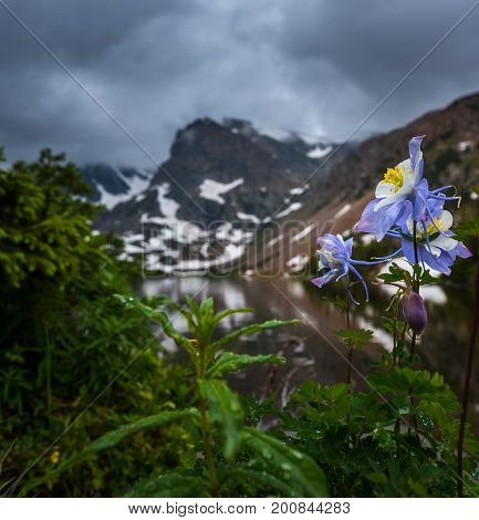 Colorado landscape Blue Columbine at Lake Isabelle