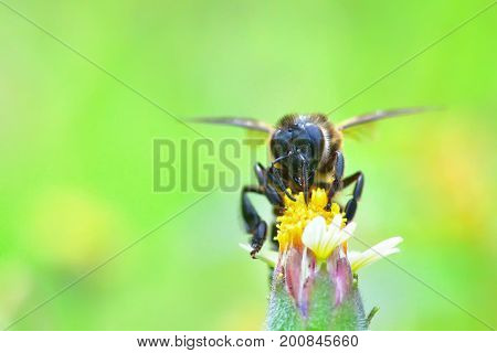A Bee Perched On The Beautiful Flower