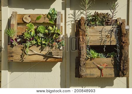 Wooden Box With Plants