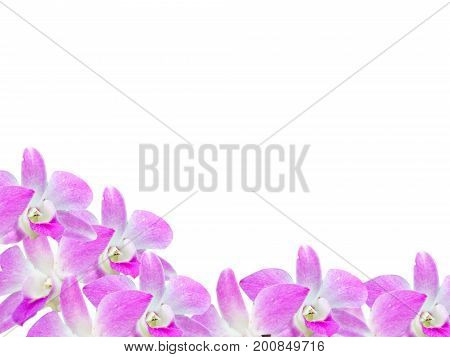 Beautiful orchid flowers frame isolated on white background for your design