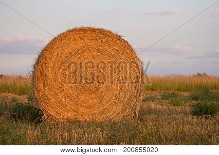 Close up of large round hay bale at sunset. Cut grass is in the foreground and tall uncut hay in the background.  A light blue cloudy sky at sunset is also in the background.