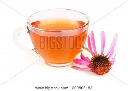 Echinacea tea isolated on white background. Medicinal tea.