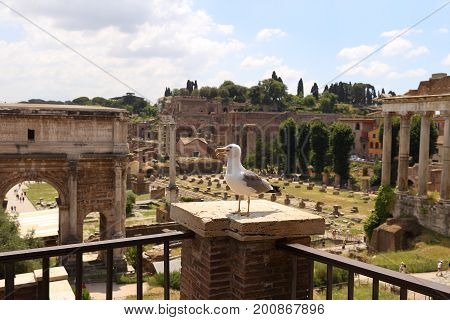 Seagal in The Roman Forum, Italian Foro Romano in Rome, Italy.