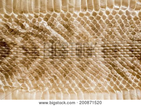 Genuine Snake Skin Leather For Texture And Background.