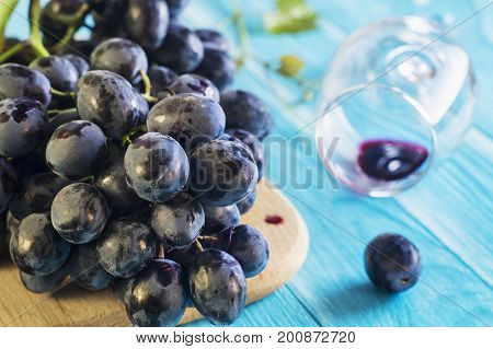 Grapes and wine glass on a blue wooden table. Branch of fresh ripe red grapes. Beautiful background with a branch of blue grapes. Dark red wine grapes.